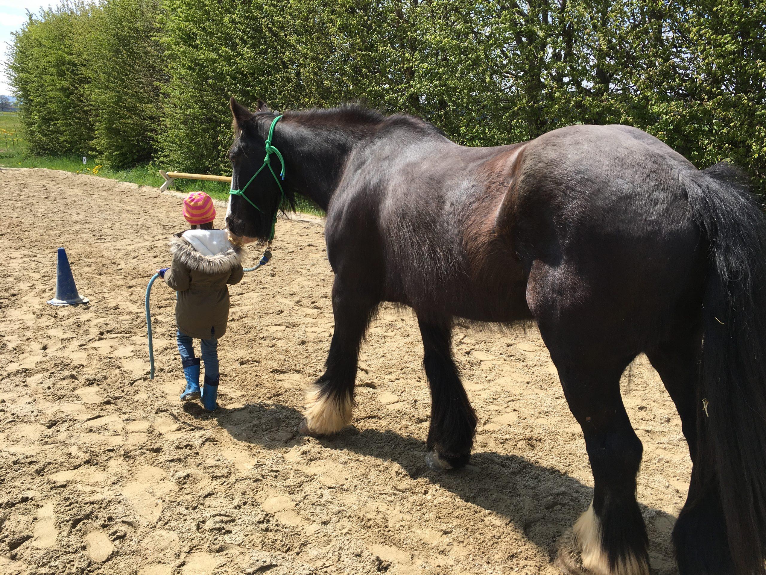 Mädchen führt großes schwarzes Pferd