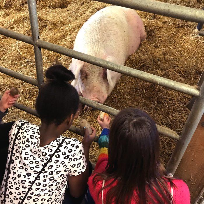 Kinder beim Bauernhof Spielraum